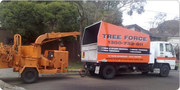 bset tree removal melbourne
