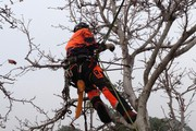 Tree removal Services in Melbourne