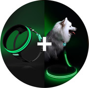 Lighted and Reflective Dog Collars - Squeaker Dogs