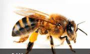 Dawson's Australia Provide Bee Removal Service in melbourne
