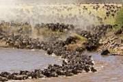 MASAI MARA SAFARIS & TOURS KENYA