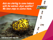 Protech Pest Control – Get Rid of Ants Today