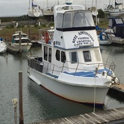 Ideal Fishing Charters Melbourne - Reel Adventure Fishing Charters
