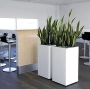 Melbourne Indoor Plants Hire