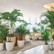 Experience The Indoor Plant in Melbourne And Improve your Air Quality