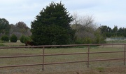 Shop Quality Horse Fencing in Australia