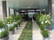 Get Cost Effective And Best Range Of Indoor Plants In Melbourne