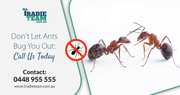 First and Foremost Option For Ants Pest Control in Melbourne
