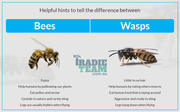 Reputed Provider of Wasp Nest Removal Service in Melbourne