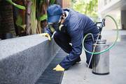 Best Pest Control Brunswick | Remove Pest Infestation