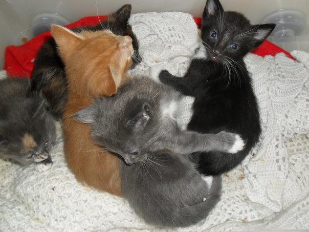 cat litter box double tray